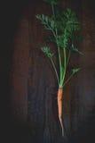 年轻红萝卜 免版税库存照片
