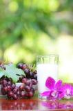 红葡萄和牛奶 免版税库存图片