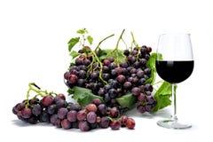 红葡萄束和酒杯在白色背景 免版税库存照片