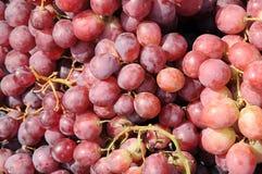 红葡萄果子 图库摄影