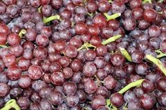 红葡萄背景和绿色茎,堆许多葡萄 它是莓果,典型地绿化分类作为白色 免版税库存图片