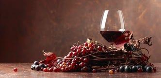 红葡萄酒和新鲜的葡萄与烘干藤离开 免版税库存照片