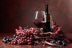 红葡萄酒和新鲜的葡萄与烘干藤离开 图库摄影