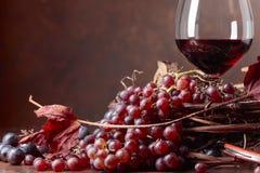 红葡萄酒和新鲜的葡萄与烘干藤离开 库存图片