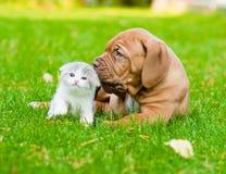 红葡萄酒嗅在绿草的小狗一只小猫 免版税库存照片