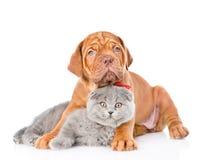 红葡萄酒小狗拥抱灰色猫 背景查出的白色 免版税库存照片