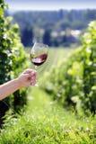 旋转在玻璃的红葡萄酒 免版税库存照片