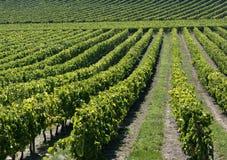 红葡萄酒法国葡萄园 库存图片
