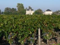 红葡萄酒葡萄园 图库摄影