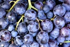 红葡萄酒葡萄背景 免版税库存照片