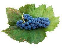 红葡萄酒酒的蓝色葡萄牙葡萄生叶在白色背景的被隔绝的对象 库存照片