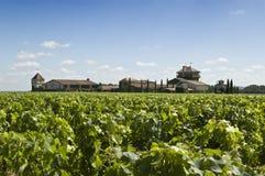 红葡萄酒酿酒厂 免版税库存照片