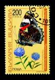 红蛱蝶Vanessa atalanta蝴蝶和Trachelium jacquinii开花,动物和植物群serie,大约1998年 免版税库存照片