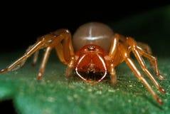 红蜘蛛 库存照片