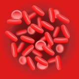 红血球(红血球)在主动脉 向量例证