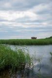 红被加冠的起重机沼泽地自然保护查龙 库存图片