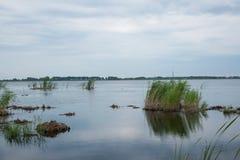 红被加冠的起重机沼泽地自然保护查龙 免版税图库摄影