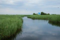 红被加冠的起重机沼泽地自然保护查龙 图库摄影