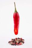 红辣椒和烘干 库存照片