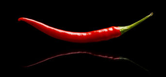 红辣椒,在黑背景隔绝的辣椒 免版税库存照片