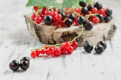 红醋栗和黑醋栗在白色木背景 图库摄影