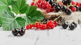 红醋栗和黑醋栗在白色木背景 免版税库存照片