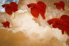 红颜色战斗的鱼,移动在天空中,与云彩、月亮、星和波浪 图库摄影