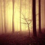 红颜色饱和的有雾的森林风景 库存照片