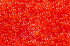 红色鱼子酱背景 免版税库存图片