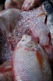 红鲷鱼钓鱼出售在市场上 库存照片