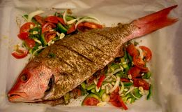 红鲷鱼鱼 免版税库存照片