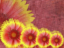 红黄色花,在伯根地织品背景 花卉明亮的构成 节假日的看板卡 库存照片