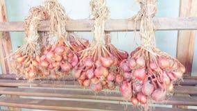 红洋葱在地方农场 库存照片