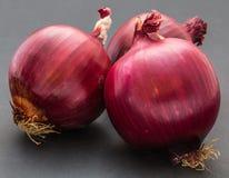 红洋葱 免版税图库摄影