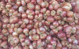 红洋葱 免版税库存照片