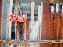 红洋葱 库存照片