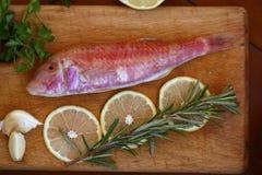 红鲻鱼 免版税库存照片