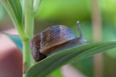 纤巧法国庭院虫 库存图片