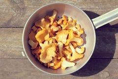 纤巧盘的开胃黄蘑菇 图库摄影
