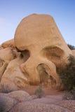 约书亚国家公园岩石头骨结构树 库存照片