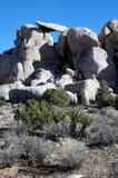 约书亚国家公园岩石结构树 图库摄影
