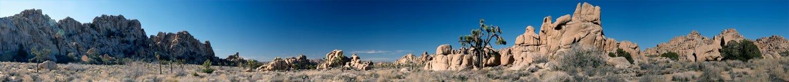 约书亚国家公园结构树 免版税库存图片