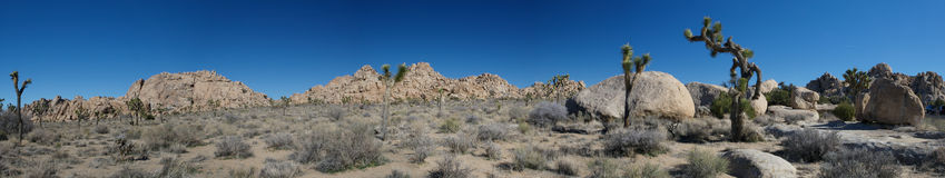 约书亚国家公园结构树 库存图片