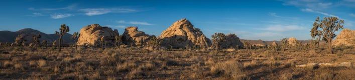 约书亚树国家公园全景 免版税图库摄影