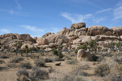 约书亚树国家公园沙漠风景 图库摄影