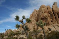 约书亚树国家公园沙漠风景 库存照片