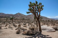 约书亚树国家公园风景,加利福尼亚 库存照片