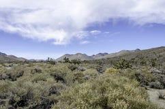 约书亚树在弗里曼峡谷 免版税图库摄影