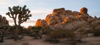 约书亚树日出云彩风景加利福尼亚国家公园 免版税库存照片