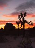 约书亚树日落云彩风景加利福尼亚国家公园 图库摄影